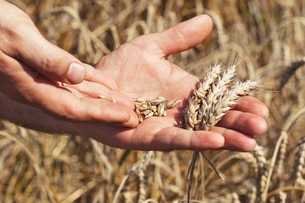 Scythe Blades Scythe Works Victoria Canada Story
